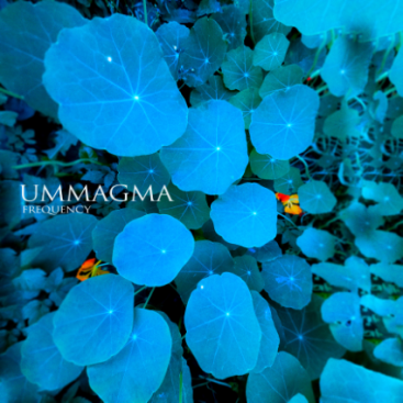 Ummagma_-_Frequency_(cover)